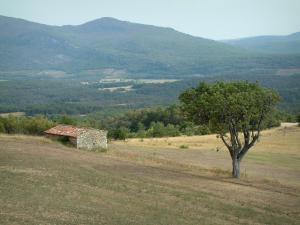Verdon Regional Nature Park - Field with a tree and a stone sheepfold (hut), hills covered with forests