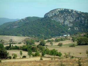 Verdon Regional Nature Park - Fields, trees, forest and rock faces