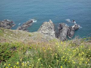 Vermilion coast - Rocky shore with wildflowers