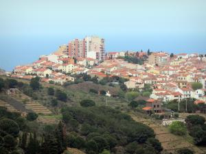 Vermilion coast - View over the roofs of Banyuls-sur-Mer