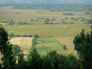 Vernier marsh - View of the meadows dotted with herds of cows; in the Norman Seine River Meanders Regional Nature Park