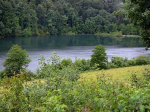Vernois lake - Lake, trees and shrubs
