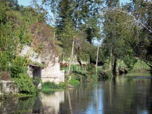 Verteuil-sur-Charente - The Charente river (Charente valley) and trees along the water