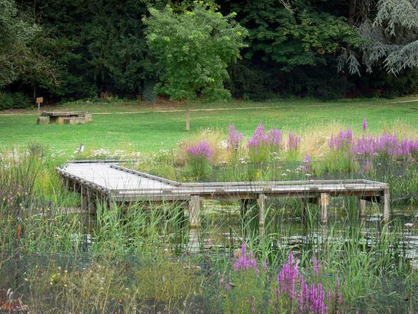Vexin Français Regional Nature Park - Dock on a pond, reeds, wild flowers, meadows and trees