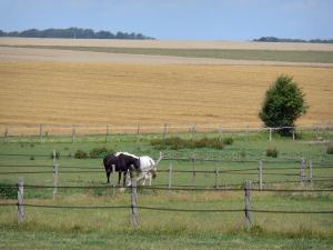 Vexin Français Regional Nature Park - Horses in a meadow and serie of fields