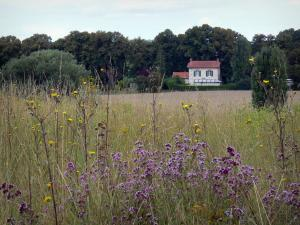 Vexin Français Regional Nature Park - Wildflowers in a field, house and trees