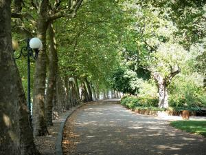 Vichy - Allier parks: avenue lined with trees