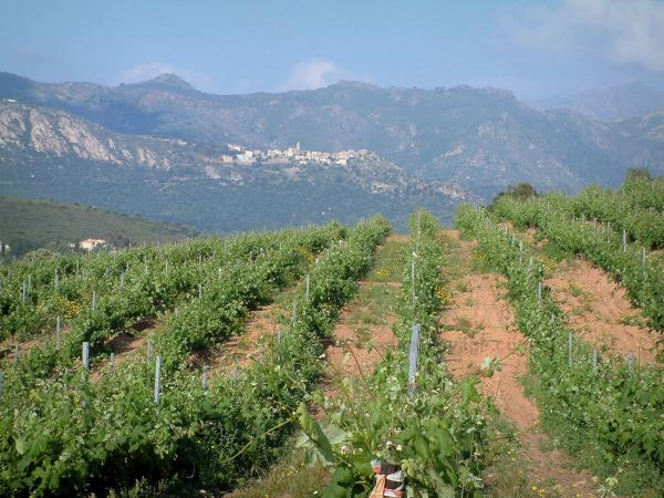 Le vignoble corse - Guide gastronomie, vacances & week-end en Haute-Corse