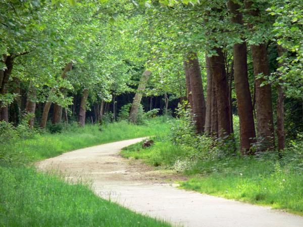Vincennes wood - Small tree-lined road