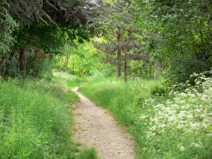Vincennes wood - Path lined with wild flowers, tall grass and trees