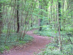 Vincennes wood - Path through the forest