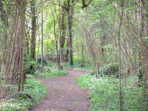 Vincennes wood - Hiking along a tree-lined trail