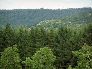 Vosges (Northern) - Trees and forest in background (Northern Vosges Regional Nature Park)