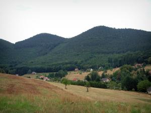 Vosges (Northern) - Pastures, houses, trees and hills covered with forests (Northern Vosges Regional Nature Park)