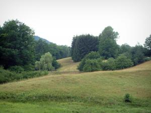 Vosges (Northern) - Pasture and trees (Northern Vosges Regional Nature Park)