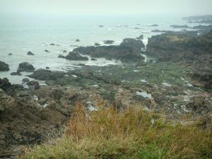 Wild coast (côte sauvage) - Vegetation, cliffs and the sea (Atlantic Ocean)