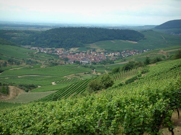 Wine Trail - Hill covered by vineyards, Alsatian village below and forests far off