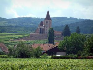 Wine Trail - Vineyards, trees, houses and church of Hunawihr, hills covered by forests in background