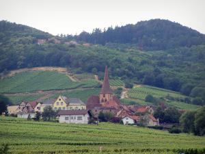 Wine Trail - Village of Niedermorschwihr surrounded by vineyards, a hill in background