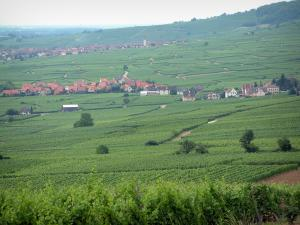 Wine Trail - Villages surrounded by vineyards