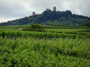 Wine Trail - Vineyards and keeps of Eguisheim (road of the five castles) perched on a small hill