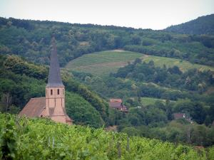 Wine Trail - Vines, Saint-André church of the village of Andlau, trees, houses and hills with vineyards and forest