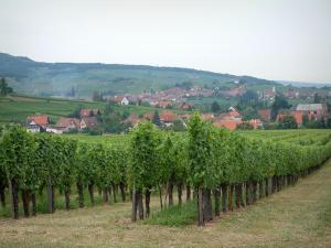 Wine Trail - Vines, houses of a village and a forest in background