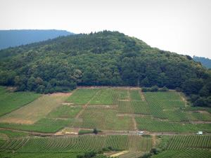 Wine Trail - Hills covered with forests dominating vineyards