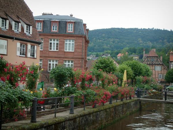 Wissembourg - Lauter river, flower-bedecked bank, houses in the old town and forest in background