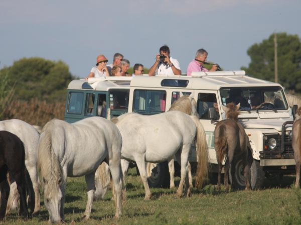 4x4 Camargue nature safari  - Activity - Holidays & weekends in Le Grau-du-Roi