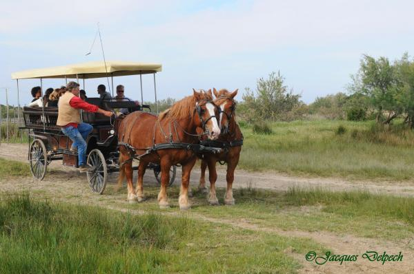 Carriage ride in the Camargue with a rancher - Activity - Holidays & weekends in Aigues-Mortes