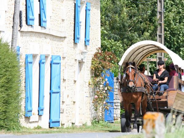 Carriage ride in the Poitevin marsh - Activity - Holidays & weekends in Maillezais