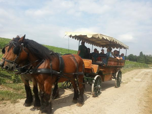 Carthorse-drawn carriage ride - Activity - Holidays & weekends in Pierry