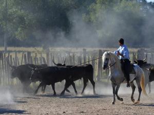 4295e6adf1d2 Découverte d une manade de taureaux et chevaux en Camargue ...