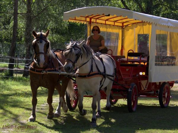 Horse-drawn carriage ride in the southern Loire Valley - Activity - Holidays & weekends in Selles-sur-Cher