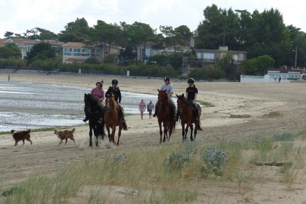 Horse or pony ride in the forest and on the beach - Activity - Holidays & weekends in Ronce-les-Bains