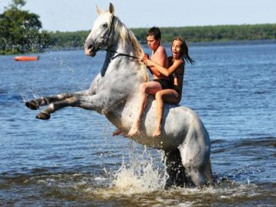 Horse Ride In The Forest And On The Beach Leisure