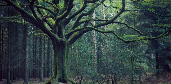 Narrated Walk in the Brocéliande Forest - Activity - Holidays & weekends in Paimpont