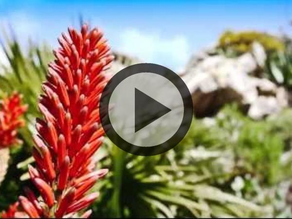 Roscoff exotic botanical garden - Activity - Holidays & weekends in Roscoff