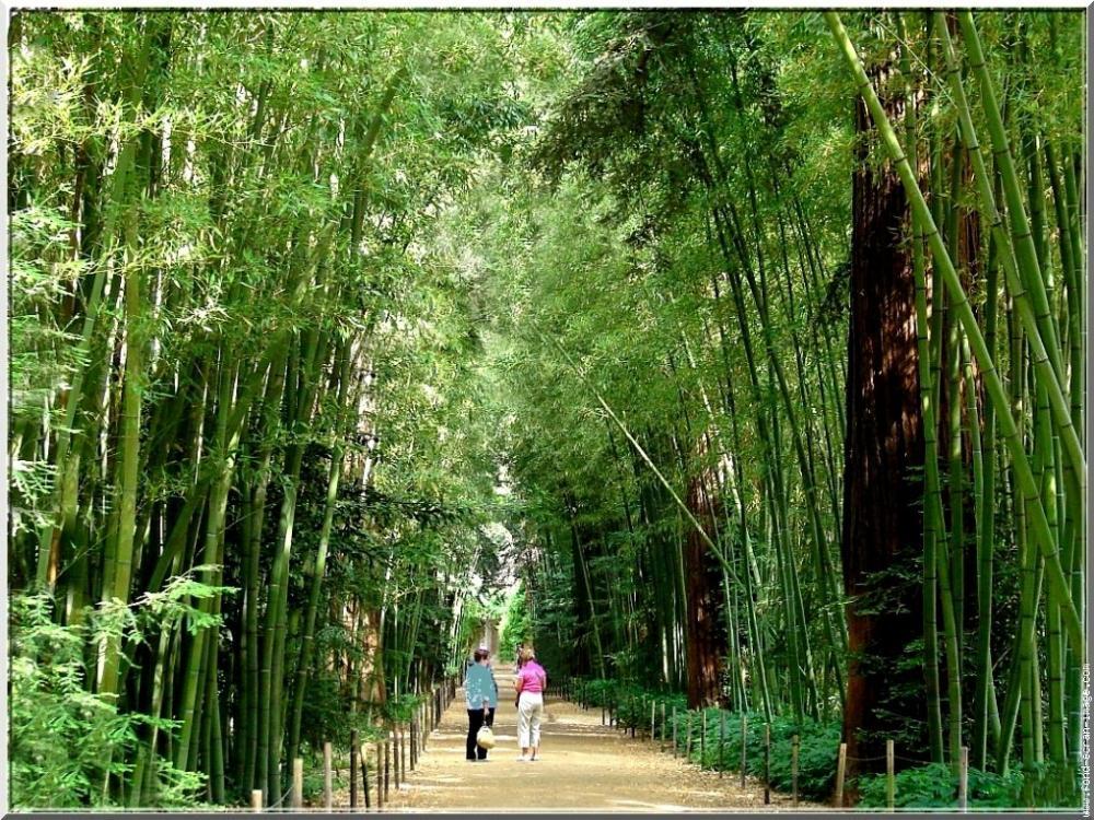 Photos la bambouseraie de prafrance guide tourisme vacances - La bambouseraie a anduze ...